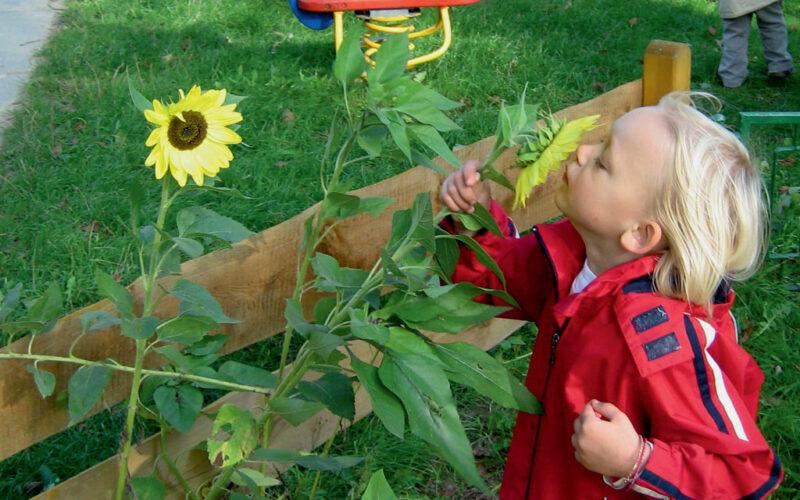 Blumen Schnuppern Im Kinderhaus Am Warnowpark