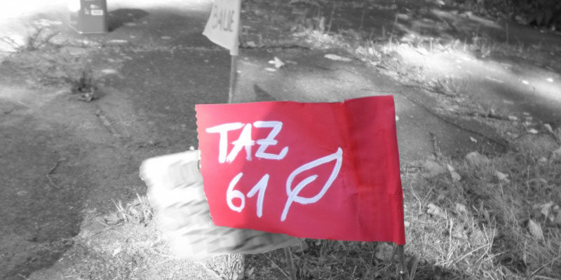 TAZ Tagesstrukturiertes Zentrum